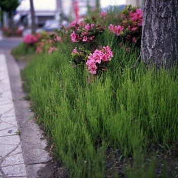 古川スナップ2.jpg