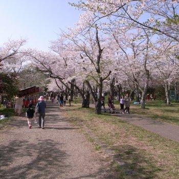 城山公園3.jpg