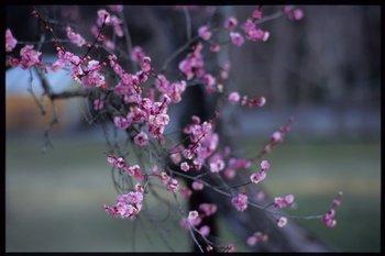 塩釜神社851.jpg