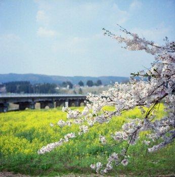 川渡1.jpg