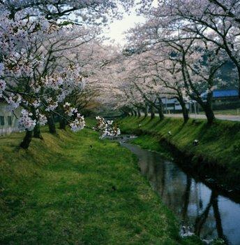 川渡2.jpg
