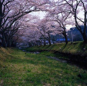 川渡3.jpg