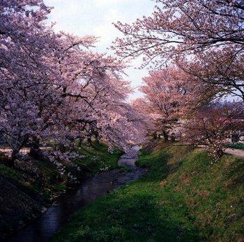 川渡6.jpg