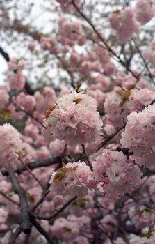 弘前公園1.jpg
