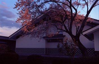 桜EX3.jpg