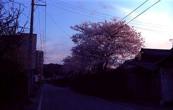 桜EX4.jpg