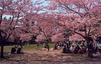 錦町公園1.jpg