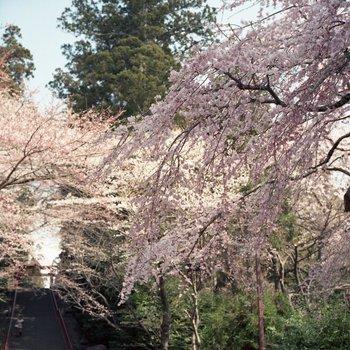 八幡神社1.jpg
