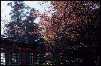 塩釜神社85.jpg