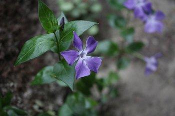庭の花1.jpg