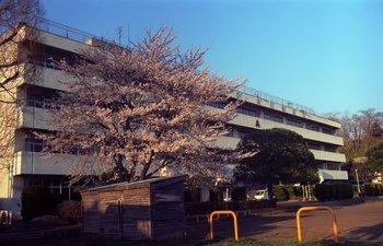 桜EX1.jpg