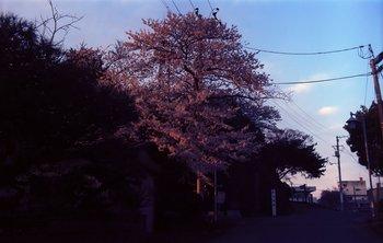 桜EX2.jpg
