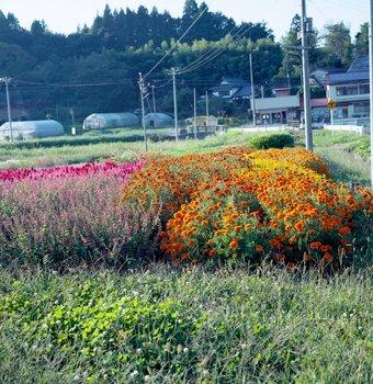 花畑2.jpg