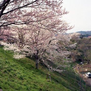 葛岡公園3.jpg