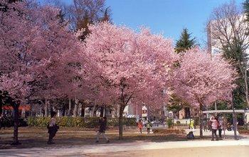 錦町公園.jpg