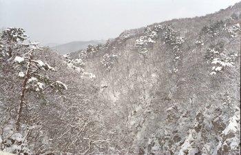 鳴子雪2.jpg
